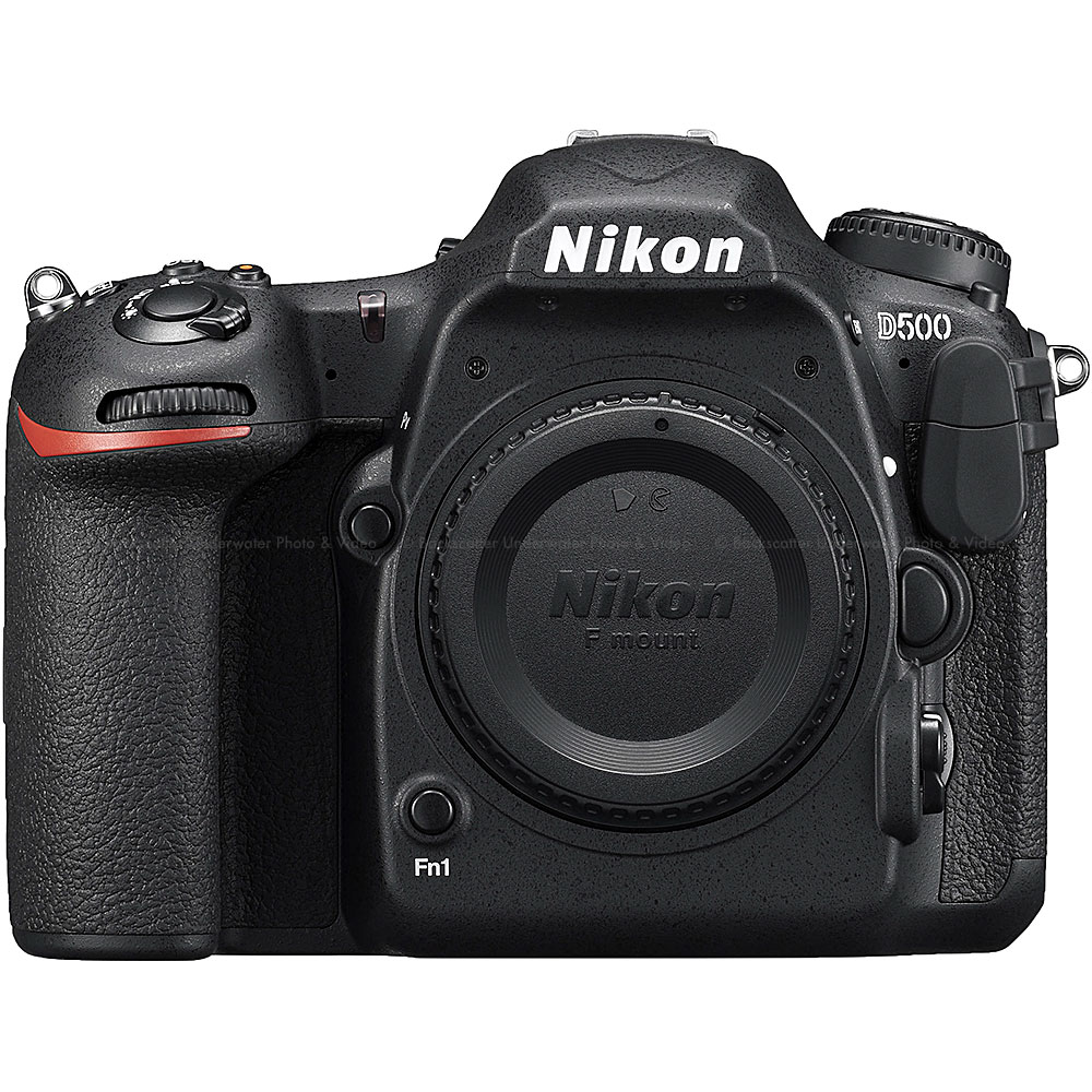 """©Jim Decker - Nikon D500 Underwater Camera Review"