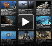 Underwater Video Gallery