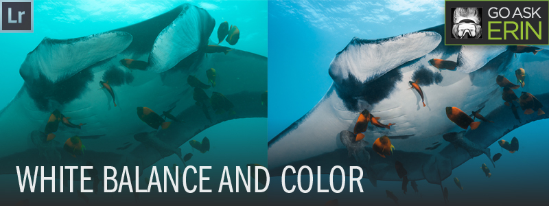 Lightroom Tutorial - White Balance for Color Underwater Photography