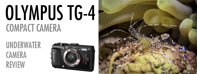 Olympus Tough TG-4 Underwater Test and Review