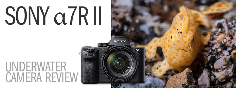 Sony a7R Mark II Underwater Review