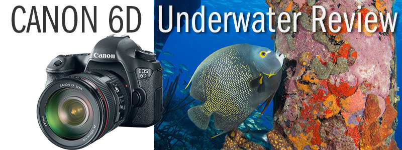 Canon 6D Underwater Camera Review