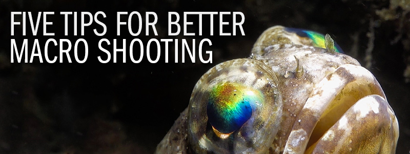 Underwater Macro Video With Sony RX100 MKIII � 5 Tips For Better Macro Video Shooting