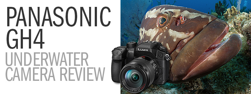 Panasonic GH4 Underwater Camera Review - Big 4K Resolution, Small Price