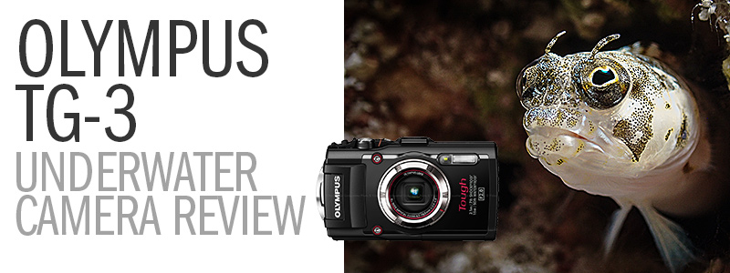 The Olympus TG-3 Underwater Camera Review - Amazing Super Macro