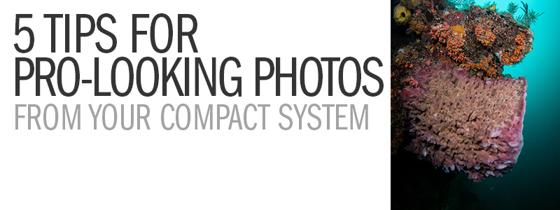 5 Tips For Pro-Looking Photos From Your Compact Camera System