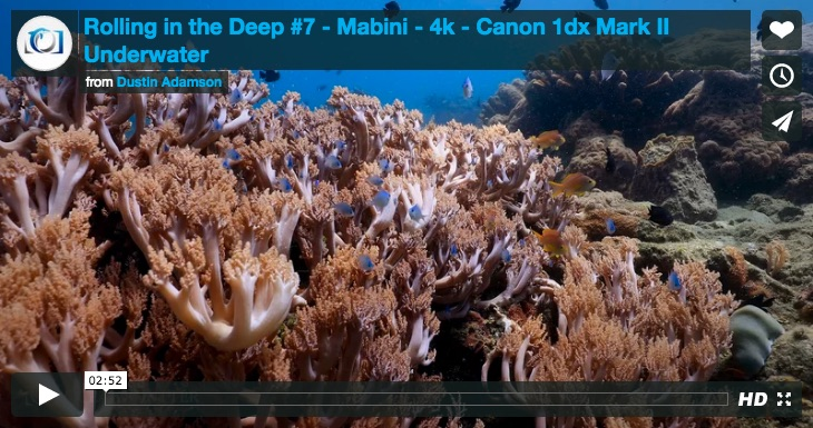 Canon 1DX MKII Underwater Video by Dustin Adamson