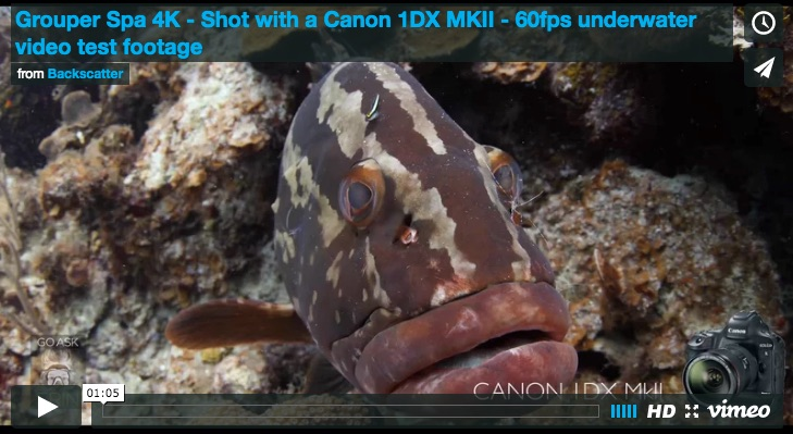 Canon 1DX MKII Underwater Video by Erin Quigley