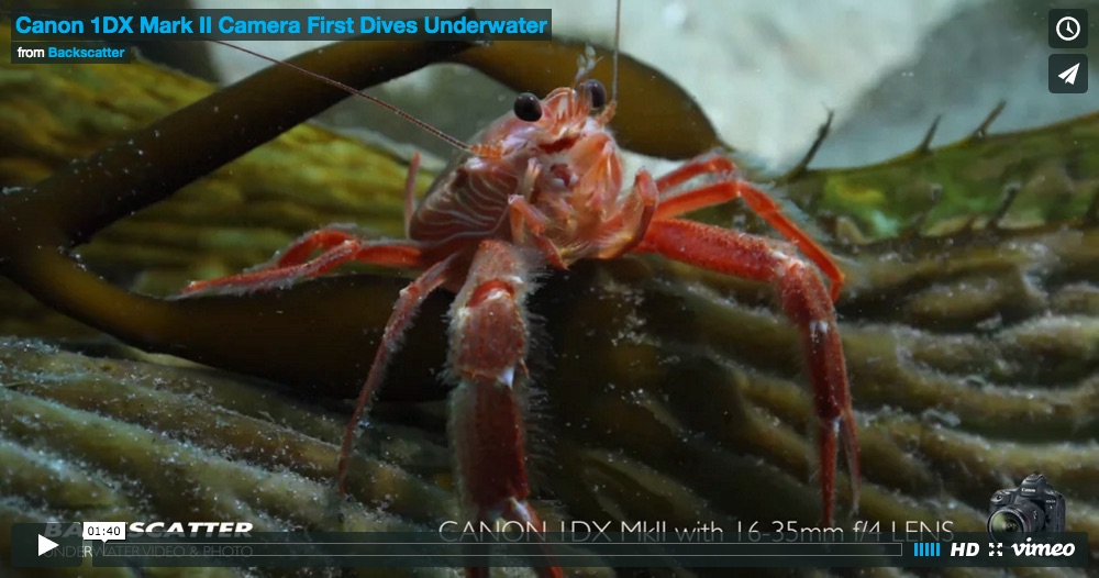 Canon 1DX MKII Underwater Video by Rusty Sanoian