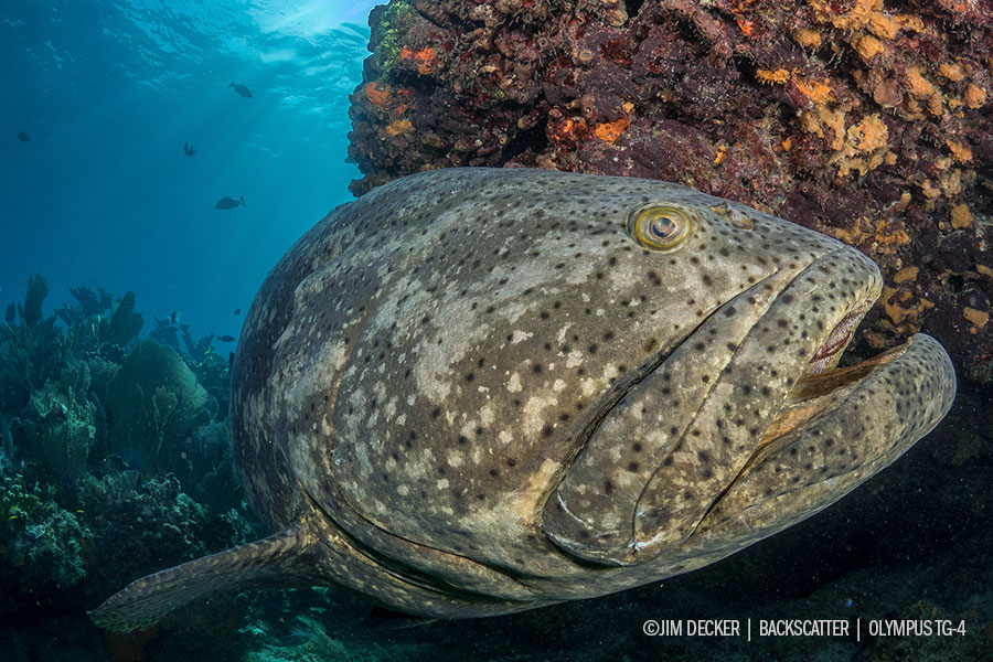 © Jim Decker - The Best Underwater Lenses for Mirrorless Cameras Wide Angle Fisheye