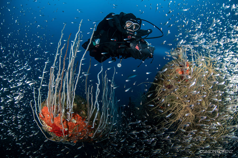©Simon Lorenz - Bikini Atoll - Pacific Master - Diver