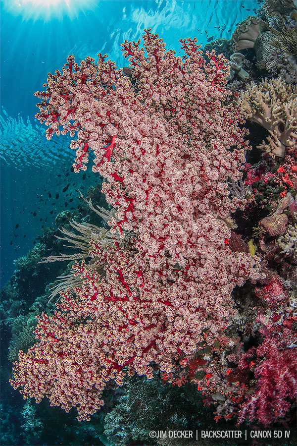 © Jim Decker - Sea Fan - Canon 5D Mark IV Camera Review
