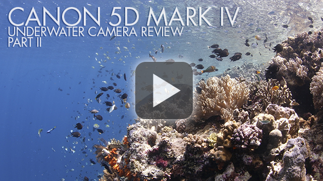 Canon 5DX MKIV - TLDR Review