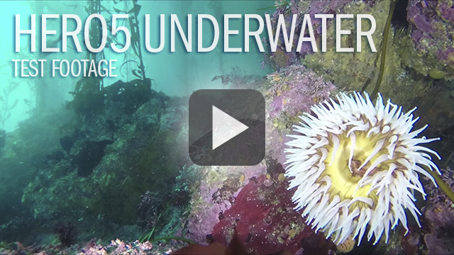 Monterey GoPro HERO5 Underwater Review Footage by Patrick Webster