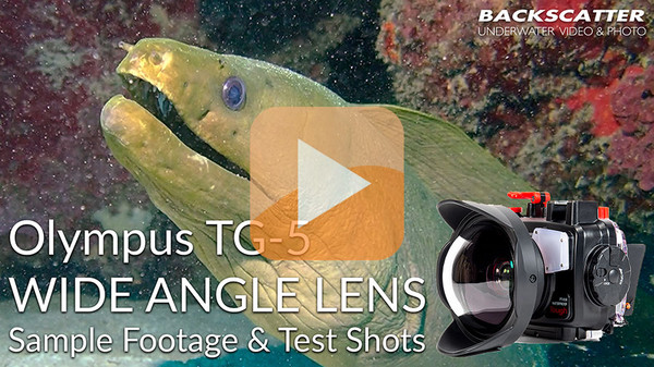 Olympus TG-5 Underwater Wide Angle Lens Review 2018 - Test Shots