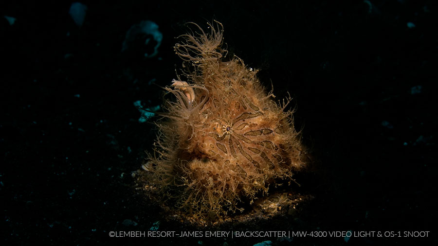 ©James Emery - Backscatter Macro Wide 4300 - Frog Fish