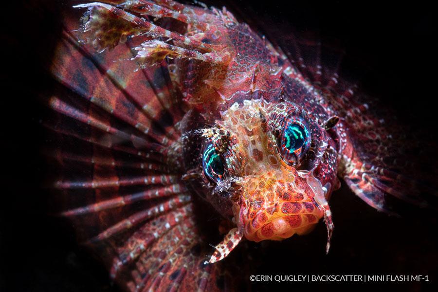 ©Erin Quigley - Backscatter Mini Flash Field Test - Rockfish