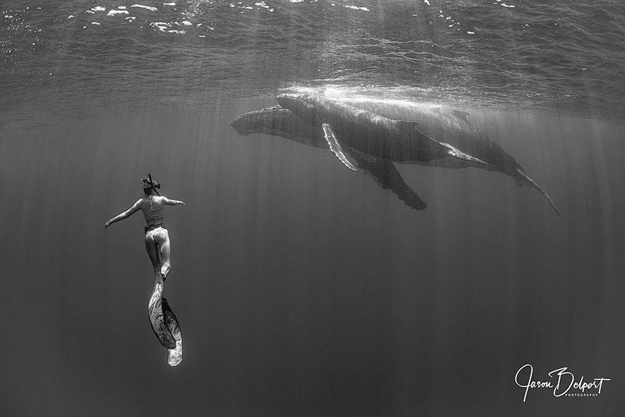 ©Jason Belport - Moorea Tahiti Dive Photo Trip - Siren