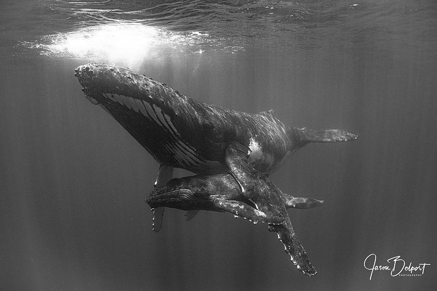 ©Jason Belport - Moorea Tahiti Dive Photo Trip - Sleepytime
