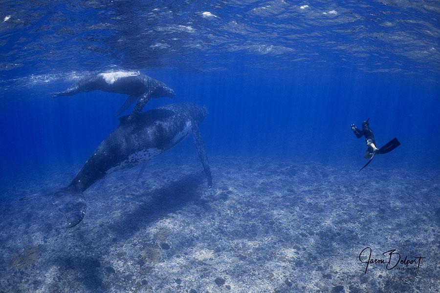 ©Jason Belport - Moorea Tahiti Dive Photo Trip - Shallow Whales with Photographer