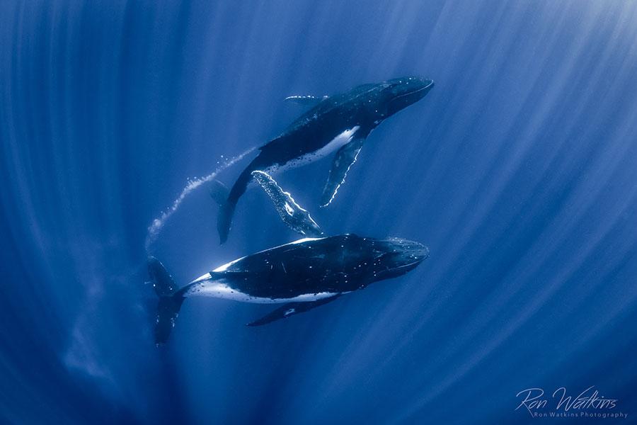 ©Jason Belport - Moorea Tahiti Dive Photo Trip - Whale Bubble Trails