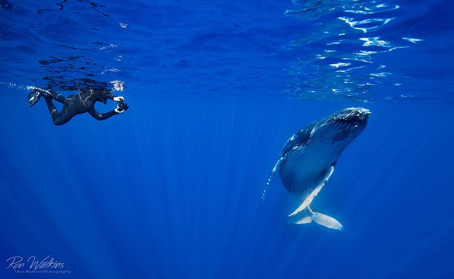 ©JRon Watkins - Moorea Tahiti Dive Photo Trip - Whale with Diver