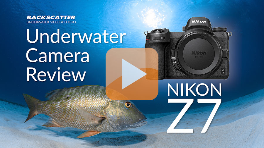 ©Jim Descker Nikon Z7 Underwater Camera Review Video