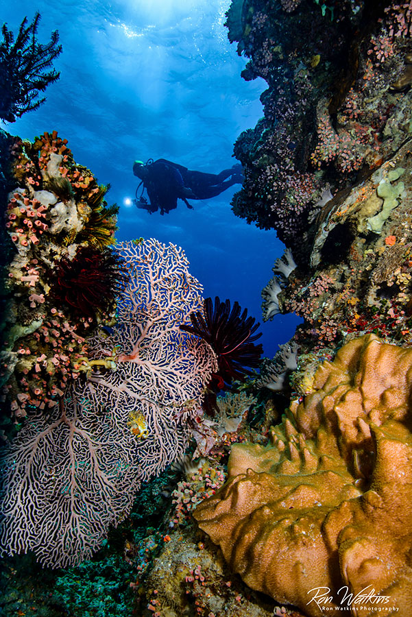 ©Ron Watkins - Atmosphere Philippines - Reef Diver