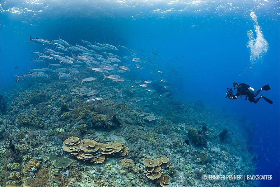 Raja Ampat, Indonesia – Dive Damai II - School of Fish