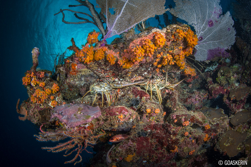 © Erin Quigly - Wide Angle Underwater Photography Boot Camp – Roatan – April 11-18 & 18-25, 2020