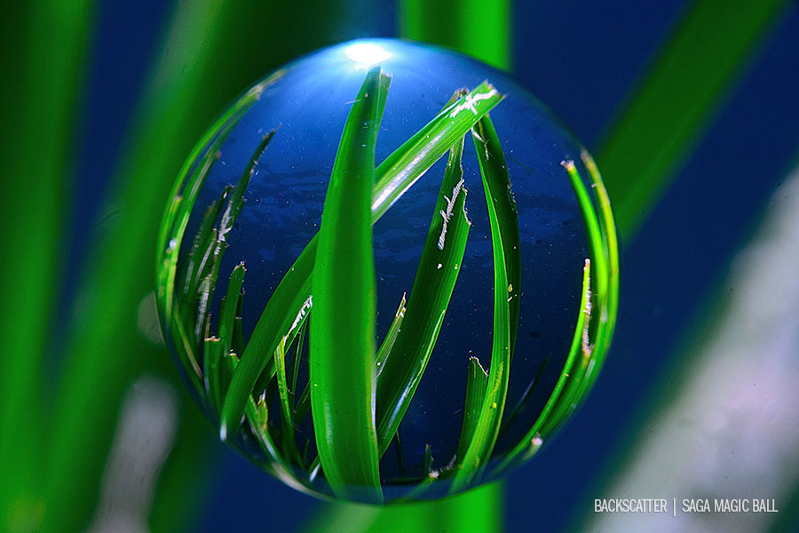 Saga Magic Ball Surf Grass