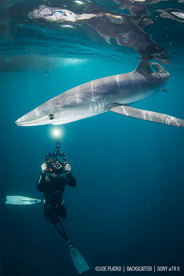 © Joe Platko Shark Diving off of San Diego