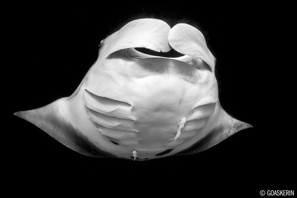 ©Erin Quigley - Socorro Islands Mexico - Nautilus Explorer -