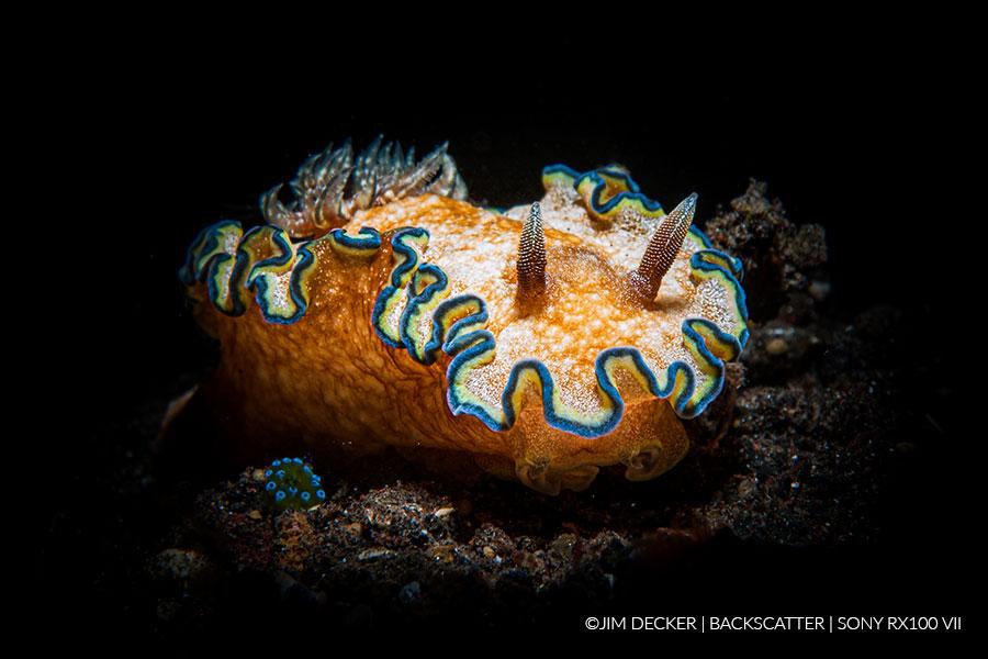 ©Jim Decker - Sony RX100 VII Underwater Review - orange nudi shot
