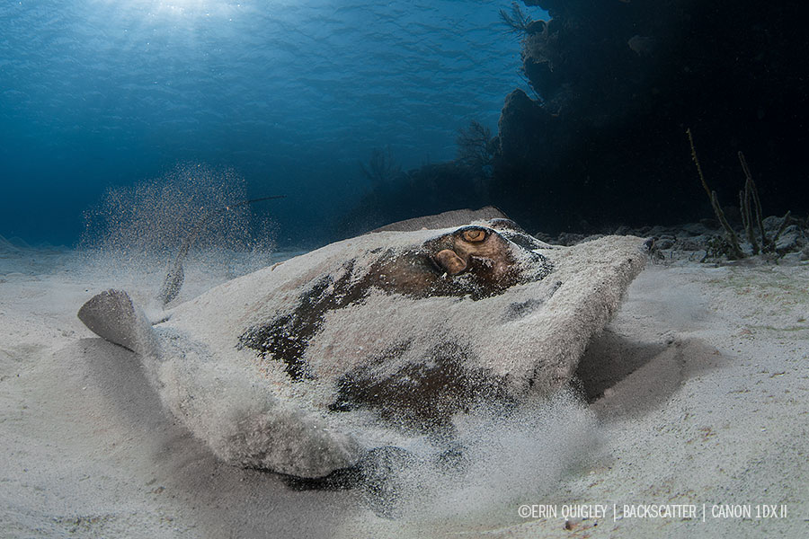 © Erin Quigley - Wide Angle Underwater Photography Boot Camp – Little Cayman – April 7-14th, 2018