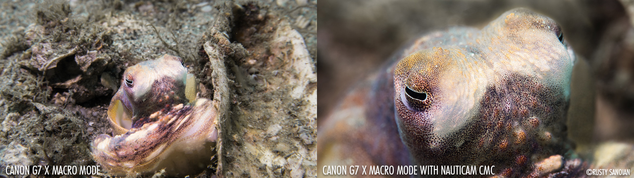 © Rusty Sanoian - Canon G7 X Macro Mode and Nauticam CMC