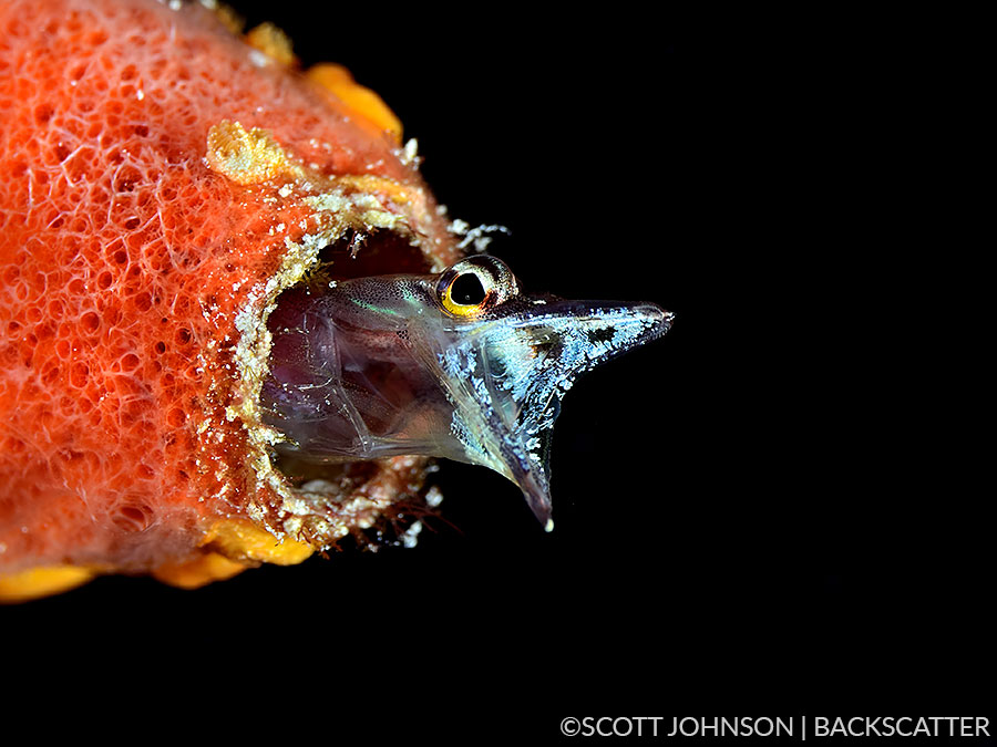 Backscatter Cuba Underwater Photography Trip Jan 17-25 & Jan 24 - Feb 2, 2020