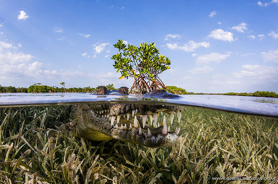 Backscatter Cuba Underwater Photography Trip Jan 17-25 & Jan 24 - Feb 2, 2020 Croc Split
