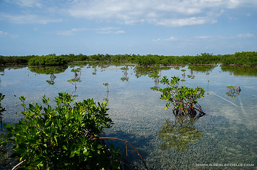 Backscatter Cuba Underwater Photography Trip Jan 17-25 & Jan 24 - Feb 2, 2020 Mangroves