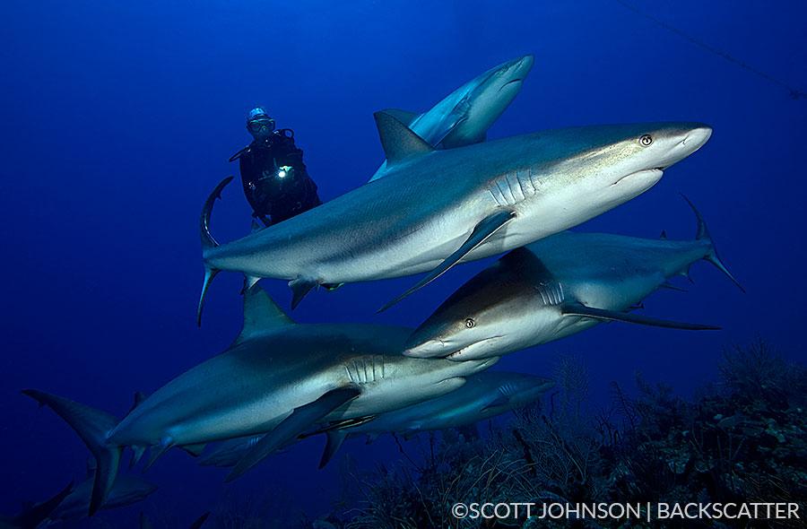 Backscatter Cuba Underwater Photography Trip Jan 17-25 & Jan 24 - Feb 2, 2020 Sharks