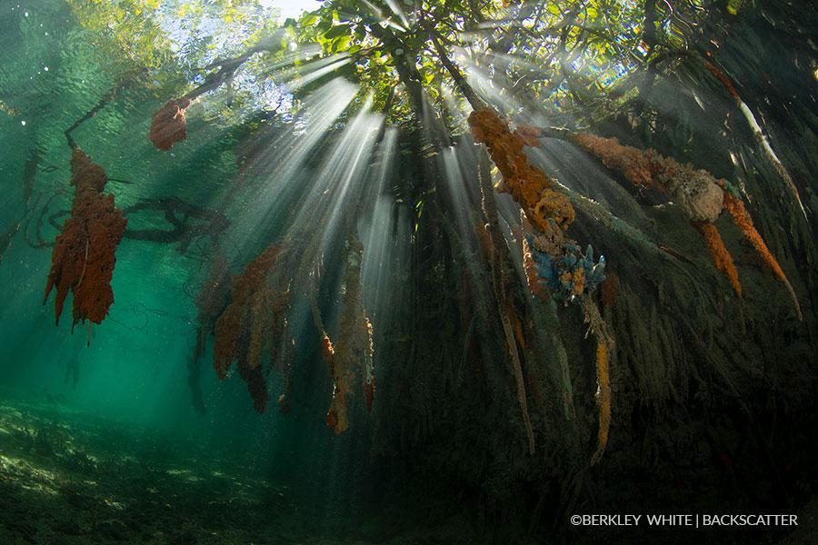 ©Berkley White - Garden Of The Queens, Cuba - Mangroves