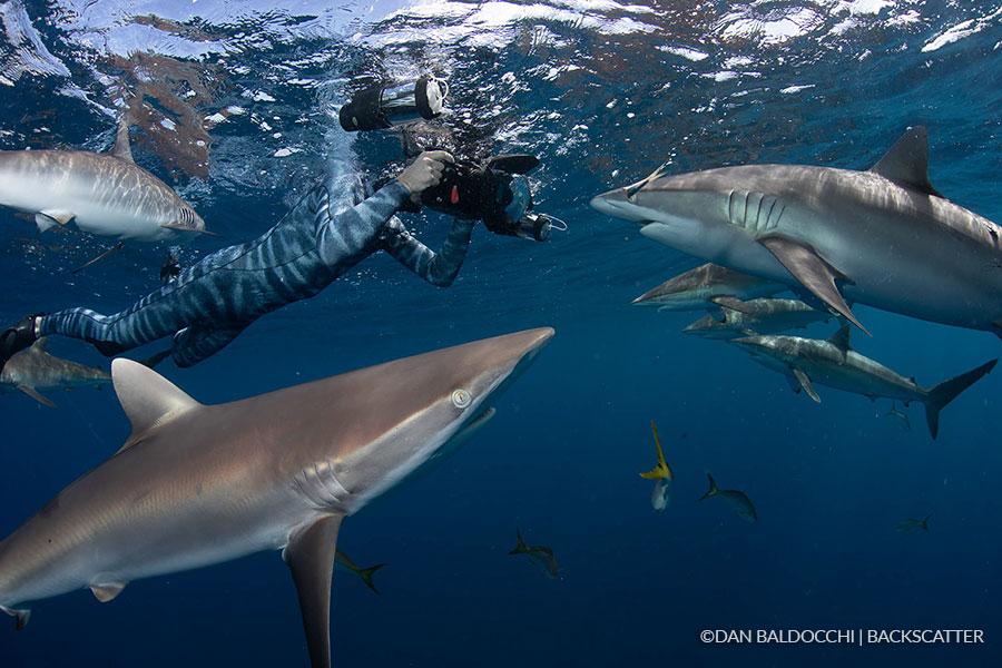 ©Dan Baldacchi - Garden Of The Queens, Cuba -Diver with Sharks