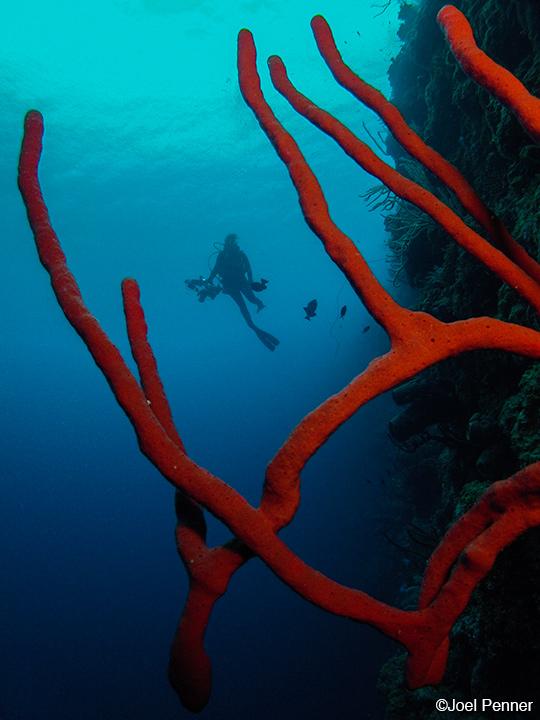 GoPro Still Underwater Photo