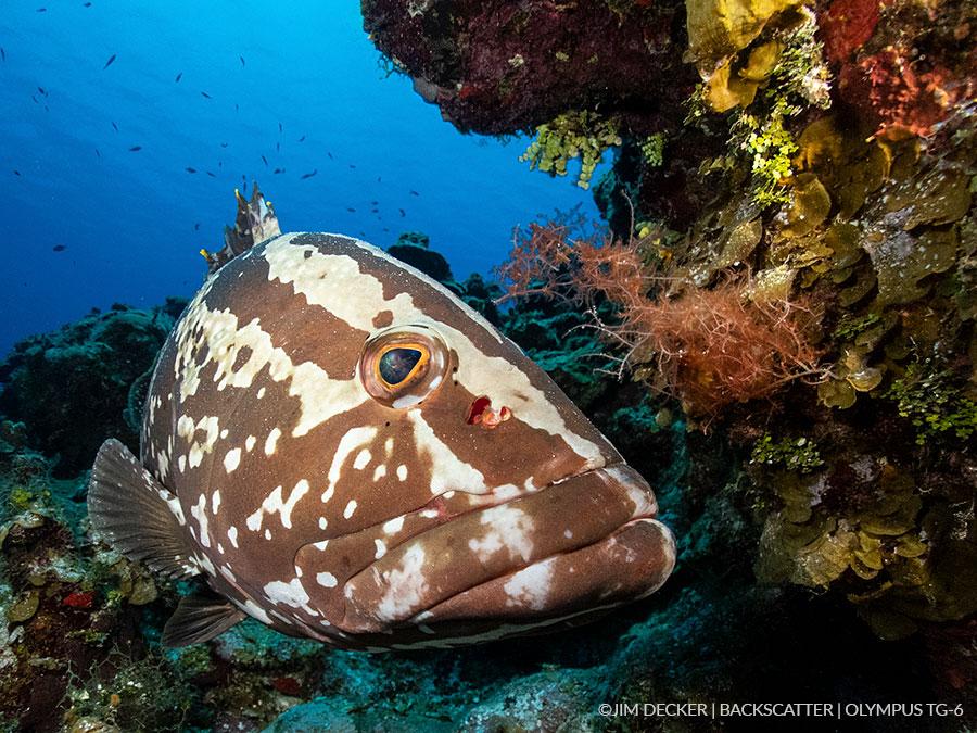 Best Underwater Cameras of 2019: Compact Cameras