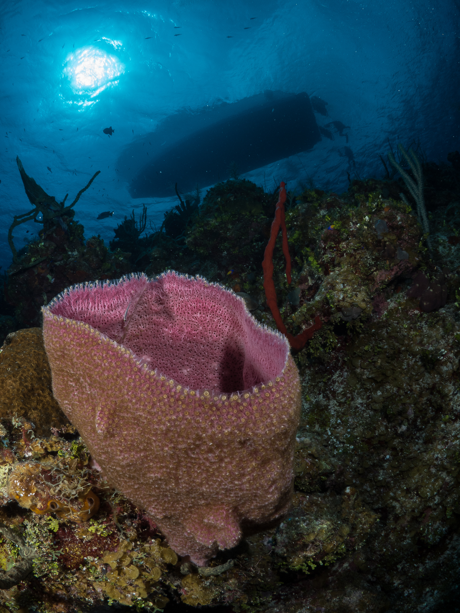 Panasonic GH​4 Underwater Review - Boat and Barrel Sponge