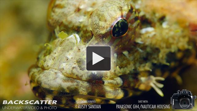 Panasonic Lumix GH4 4K Camera - Video by Rusty Sanoian