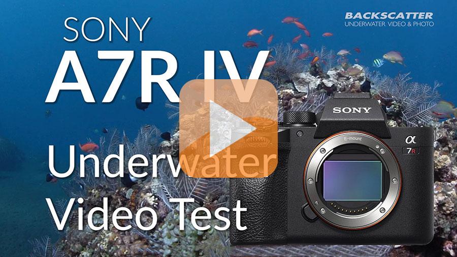 ©Jim Decker - Sony a7R IV Underwater Camera Review - Test Video