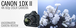 Canon 1Dx Mark II Underwater Camera Review