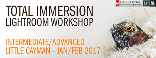 Lightroom Total Immersion Workshop - Intermediate/Advanced - January 28th - February 4th, 2017