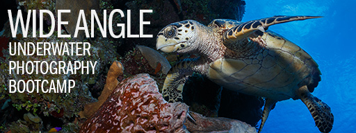 Wide Angle Underwater Photography Boot Camp - Little Cayman - January 21-28th, 2017